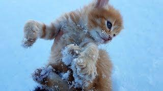 СПАСЕНИЕ КОТЕНКА ИЗ СНЕЖНОЙ ЗАПАДНИ. Нашли маленьких котят. Поиски мамы кошки ночь в неведение